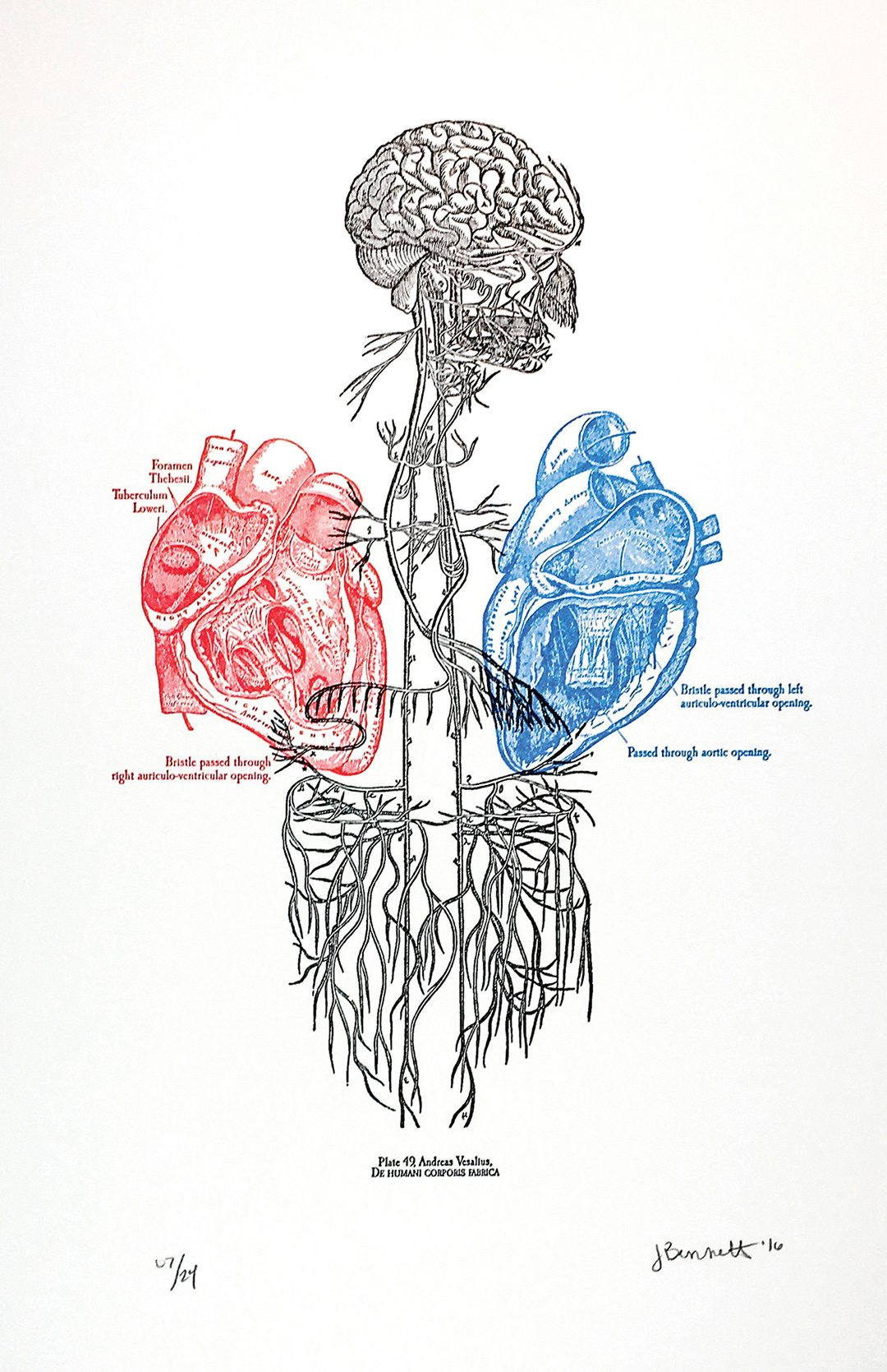 Anatomical Letterpress Art Print Two of Hearts Anatomy